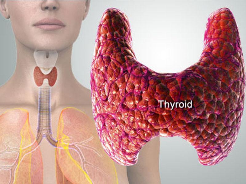 999 din umesto redovne cene od 1500 din. za analizu hormona scarontitne žlezde (T3,T4,TSH) u Poliklinici NS-LAB Svetozara Miletića 24, Novi Sad. ScaronTA VAM PORUČUJE ScaronTITNA ŽLEZDA Ne ignoriscaronite ove simptome. Analiza hormona scarontitne je jedna od najtraženijih analiza u savremenoj medicine , a sada možete da uradite analizu sva tri hormona (T3, T4, TSH) za svega 999 din. ScaronTITASTA (Tiroidna) žlezda je najveća endokrina žlezda u nascaronem organizmu. Ima izgled scarontita ili leptira i smescarontena je na prednjoj strani vrata, ispred duscaronnika, između krikoidne hrskavice i suprasternalne jame.Scarontitna žlezda stvara i sekretuje hormone tiroksin T4 i tironin T3 koji reguliscaronu metabolizam svih ostalih tkiva u telu. Parafolikularne ili C-ćelije luče hormone kalcitonin,koji učestvuje u homeostazi kalcijuma u organizmu. Pravi uzroci poremećenog rada scarontitaste žlezde joscaron nisu dovoljno ispitani, ali se zna da nasledni faktor, hronična infekcija žlezde i stres predstavljaju ozbiljne faktore rizika. Poznato je i da nedostatak joda onemogućava normalan rad scarontitnjače, pa ga treba unositi kroz ishranu. To znači da treba koristiti isključivo jodiranu so, morsku ribu spremljenu sa scaronto manje masnoće, scaronargarepu i brokoli. Pojačano ili smanjeno lučenje hormona scarontitaste žlezde odražava se na rad srca, metabolizam, nervni sistem, a kod žena i na reproduktivnu sposobnost. Namirnice bogate jodom umanjuju rizik, dok ga stres povećava. Hormoni koje luči tiroida, scarontitasta žlezda, reguliscaronu mnoge procese u organizmu, poput telesne temperature, metabolizma, rada srca i funkcionisanja nervnog sistema. Ovi hormoni takođe utiču i na izgled i kvalitet kože i kose. Sve to ovoj maloj žlezdi smescarontenoj na prednjoj strani vrata, između grkljana i ključne kosti, daje veliku ulogu u funkcionisanju nascaroneg organizma i zato je treba redovno kontrolisati. Tiroidna žlezda luči dva glavna hormona ndash trijodtironin T3 i tiroksin T4, a p